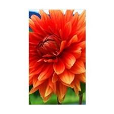 Orange Dalia Decal
