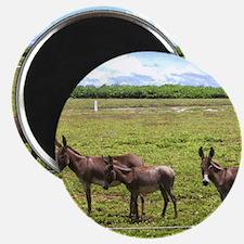 NoteCard-donkey.gif Magnet