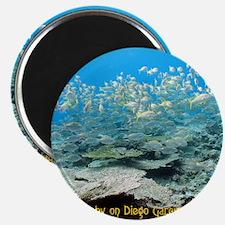 NoteCard-yellowfish.gif Magnet