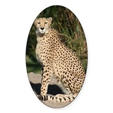 cheetah1 Decal