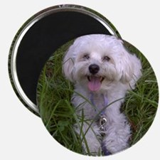 Trinket in the Grass Magnet