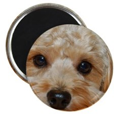 PreciousPup_Pillow Magnet