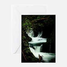 Lake Quinault Rainforest II Greeting Card