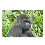 Gorilla Postcards