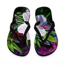 DSC_0013 Flip Flops