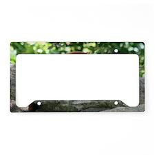 IMG_2200 License Plate Holder