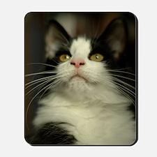 pet-nc16 Mousepad