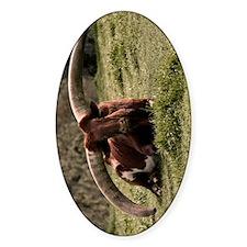 (9) Watusi Cow Decal