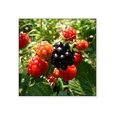 "Berries Square Sticker 3"" x 3"""
