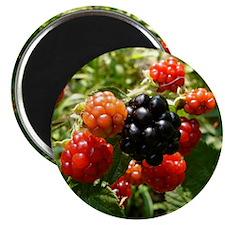 Berries Magnet