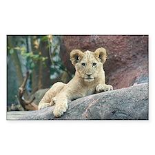 lion cub Decal