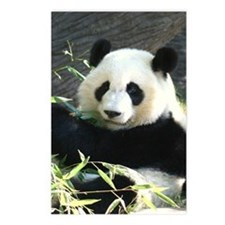 panda2 - Copy Postcards (Package of 8)