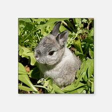 """Rabbit in lettuce 1 Square Sticker 3"""" x 3"""""""