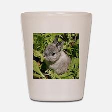 Rabbit in lettuce 1 Shot Glass