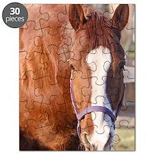 cisco magnet Puzzle