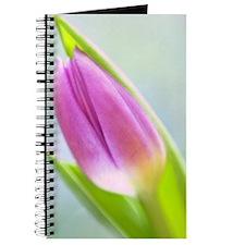 IMG_9480-01b Journal