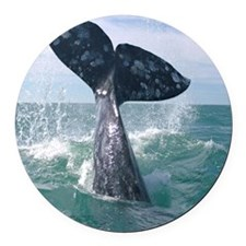 GrayWhale-MP Round Car Magnet