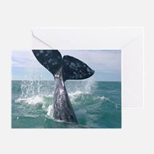 GrayWhale-MP Greeting Card
