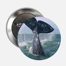 "GrayWhale-MP 2.25"" Button"