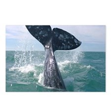 GrayWhale-MP Postcards (Package of 8)