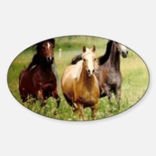 3-horses Decal