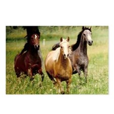 3-horses Postcards (Package of 8)