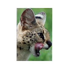 Serval Cat Rectangle Magnet