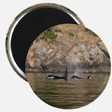 orcas-cstr Magnet
