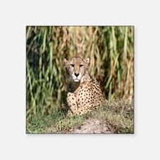 "cheetah2-Cstr Square Sticker 3"" x 3"""