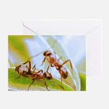 ant1 raw-jpeg 100ax3 Greeting Card