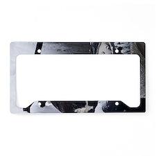 shorty License Plate Holder
