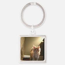 3-orange-maine-coon-kittencp2 Square Keychain