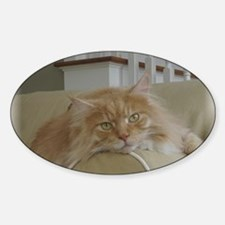 big-maine-coon-catcp2 Decal