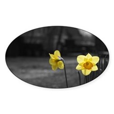 selective colour daffs Decal
