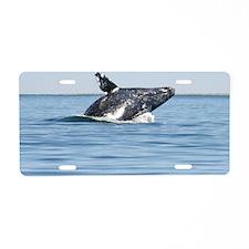 2-IMG_1112 Aluminum License Plate
