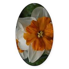 flower barrett browning daffodil Decal