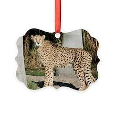 IMG_4106 Ornament