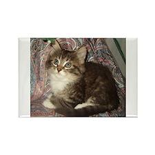 Maine Coon Kitten Keagan Rectangle Magnet