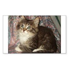 Maine Coon Kitten Keagan Rectangle Decal