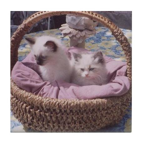 Ragdoll Kittens Tile Coaster