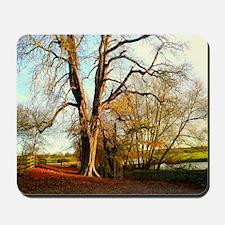 Trees in autumn sunshine. Mousepad