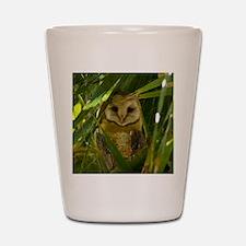 Palm Tree Owlet Shot Glass