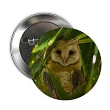 """Palm Tree Owlet 2.25"""" Button"""