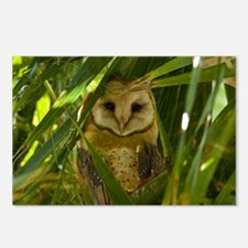 Palm Tree Owlet Postcards (Package of 8)