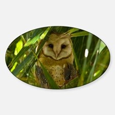 Palm Tree Owlet Decal