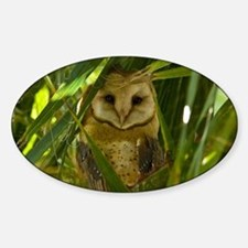 Palm Tree Owlet Sticker (Oval)