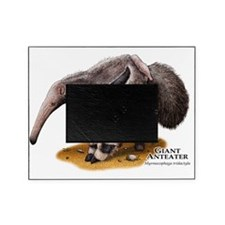 Giant Anteater Picture Frame