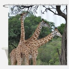 three giraffes Shower Curtain