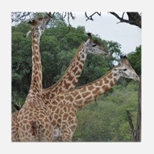 three giraffes Tile Coaster