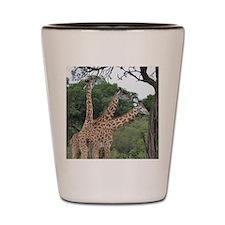 three giraffes Shot Glass